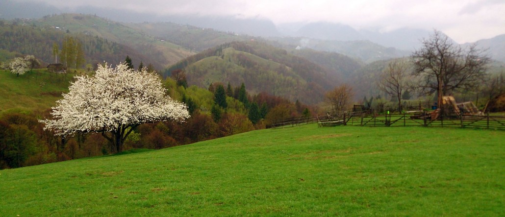 cazare bran, Bratescu, bran accommodation